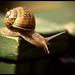 snail image, photo or clip art
