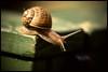 Snail_Macro (Dave_G_Stewart) Tags: macro garden snail flickrific anawesomeshot aplusphoto flickraward naturethroughthelens