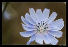 EN ESTADO PURO (jmsoler) Tags: españa naturaleza flower primavera spain europa europe flor zaragoza 2009 aragón nikond90 a3b 180550mmf3556 jmsoler