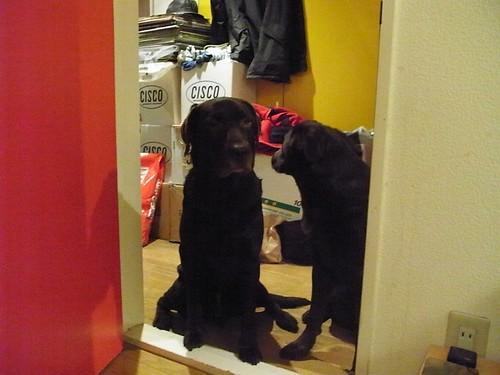 Buddy&Chloe