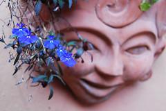 Swirl (Lauren Barkume) Tags: africa pink flowers blue red woman sun smile face statue garden southafrica outside afternoon outdoor pot pottery swirl johannesburg joburg melville abigfave laurenbarkume