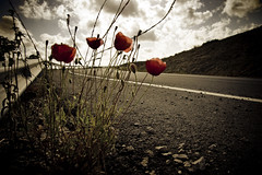 Flowers on the road (maria.benitezmontero) Tags: cdgexplorer
