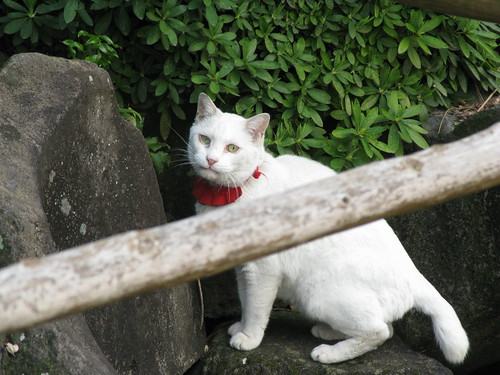 猫@江東区