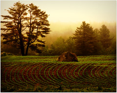 ~ daybreak on the land ~ (xandram) Tags: trees field rock fog photoshop farm pines land cornrows theunforgettablepictures musicsbest redmatrix