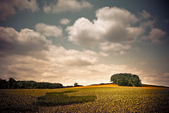 Atmosphere of Life (Loren Zemlicka) Tags: blue trees light shadow summer sky white green field wisconsin clouds rural canon landscape photography gold photo midwest image farm horizon country hill picture fluffy atmosphere crop cumulus 5d agriculture puffy canonef1740mmf4lusm cultivate canoneos5d flickrexplore flickrfrontpage lorenzemlicka