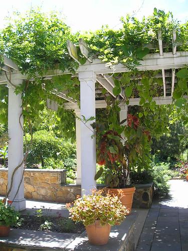 Frelinghuysem Arboretum! 13