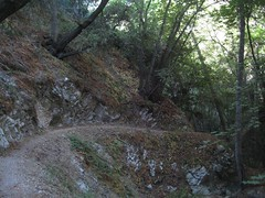 Trail to Oakwild.jpg (Altacanyada, California, United States) Photo