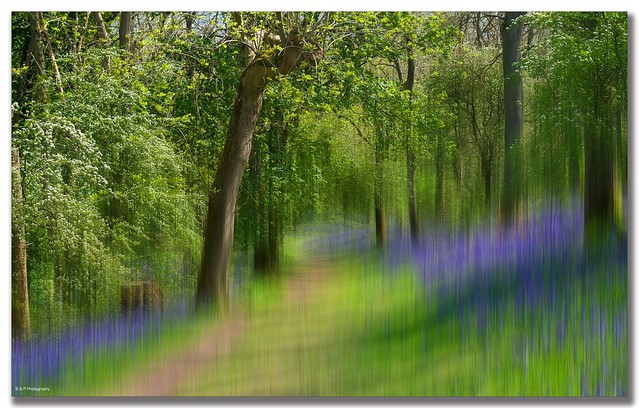 Bluebell Wood  in The Malvern Hills