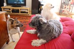 three dogs!