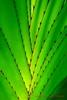 V VERDE (DIAZ-GALIANO) Tags: verde green canon hojas galiano 70200 30d goldmedalwinner goldstaraward
