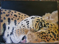 LEOPARDO (donatellaribezzo) Tags: africa italy india eye art face animal animals cat design eyes italian asia interior indian leopard ethiopia cougar cougars donatella leopardi dipinti