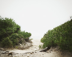 (Salva Lpez) Tags: sea beach rain fog clouds grey dof camino path 50mm14 vegetation melancholy mistery mediterranea lostsummer canoneos5dmarkii