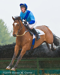 Isti Bee (smcarterphotos) Tags: horses horse race cheval jump jumping jockey pferd equestrian equine steeplechase warrenton pointtopoint