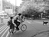 * (YENTHEN) Tags: street bw dog bike bicycle candid father hsinchu taiwan daugher nthu yenthen r0018858