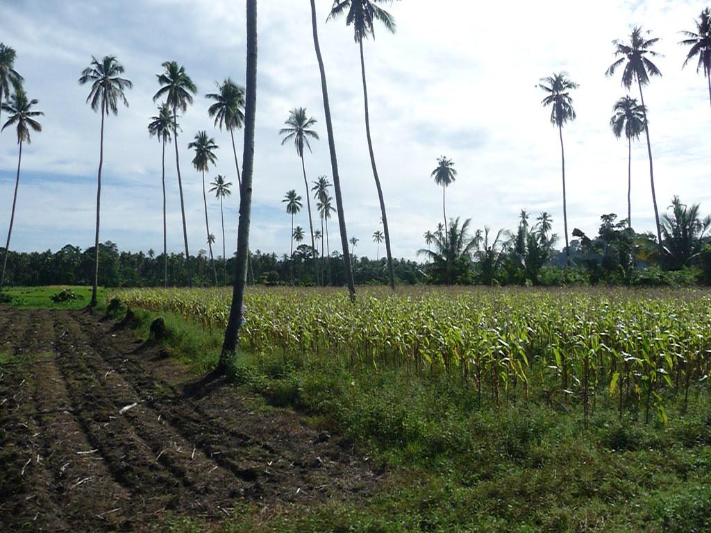 Gorontalo (50)