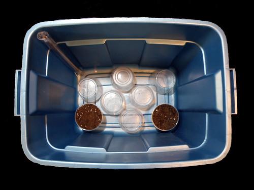 Simple to Make Sub-irrigated Tote Box Planter