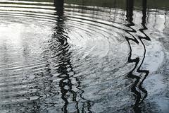 movement (Werner Schnell Images (2.stream)) Tags: reflection water movement ws desrondsdansleau