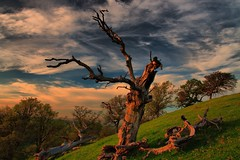 tree creature close up at sunset (Marc Crumpler (Ilikethenight)) Tags: california trees sunset usa canon landscape hiking trails hills bayarea eastbay ebrpd roundvalley blueribbonwinner contracostacounty eastbayregionalparkdistrict tamron1750 40d ebparks amazingshots canon40d betterthangood theperfectphotographer goldstaraward artofatmosphere ebparksok
