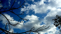 (yusufyusuf85) Tags: world sky cloud colors clouds photography photo leaf flickr colours photographer earth facebook dnya gardenpeace yusufyusuf85 picasa3 yusufaliolu yusufalioglu unbornart