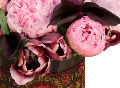 jayson home and garden peonies