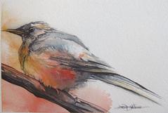 sometimes they glow (Jennifer Kraska) Tags: bird robin pen watercolor jennifer kraska