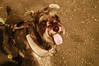 Scottie in Infrared (aeschylus18917) Tags: japan tokyo nerima danielruyle aeschylus18917 danruyle druyle infrared hikarigaoka park ir nikon d70 赤外線 landscape portrait scenery surreal nikond70 tree 日本庭園 nihonteien sky ダニエルルール 丹尼爾 ダニエル ルール infra red gyoen trees grass 公園 garden 庭 dog tongue terrier scottishterrier scottie aberdeenterrier canislupusfamiliaris pet nerimaku shakuji koen shakujikoen shakujipark 東京 日本 練馬区 練馬 上石神井駅 mammal pxi pxt carnivora canidae canislupus