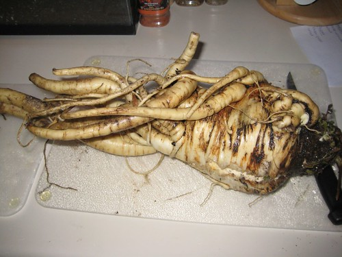 Giant mutant parsnip