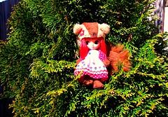 Sun It Rises (13/52) (Bebopgirl1969) Tags: red music brown tree green lyrics squirrel doll blythe petiteblythe fleetfoxes squigglysquirrel sunitrises