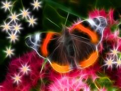 Red Admiral Butterfly Fractal (2) (Rosemarie.s.w) Tags: flowers autumn friends light england abstract colour art nature floral beauty illustration photomanipulation photoshop wow butterfly paintshop lumix yahoo wings flickr pattern glow view bright blossoms wing butterflies somerset scene panasonic explore myart fractal paintshoppro blooms naturalbeauty mygarden 2009 taunton orenge awesomeshot autumnsunshine mybestphotos mygardenflowers bej mywinners abigfave flickrdiamond tz3 lumixtz3 heartawards theunforgettablepictures platinumheartaward redfieldplugin fractalius multimegashot thatscreativity thenewselectbest flickrenvythebesttm