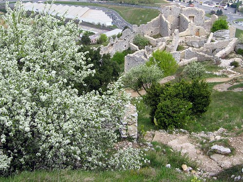 Flowering tree in the ruins.