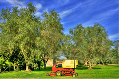 The Olive Grove (esinuhe69) Tags: trees red sky rome roma tree verde green alberi grove centro lawn meadow olive machine cielo albero prato macchina celestial celeste oliveto the appia rossa raccoglitore tagliacarne ardeatina raccogli esinuhe69