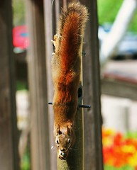 Just raiding the bird feeder (o-rusty-nail) Tags: fivestars impressedbeauty adorablecritter crazyaboutnature photographersgonewild worldnaturewildlifecloseups natureisallallisnature naturesgreenstar