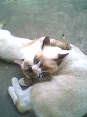 Cats Kiss