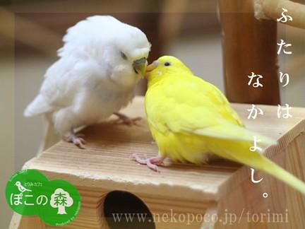 鳥カフェ とりみカフェ 画像3