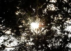 Into the Sun (jdkvirus) Tags: africa light sun leaves silhouette canon kenya lensflare 2009 jk eastafrica 50d canonef100mmf28macrousm canon50d