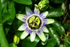 Chest of nature (ARASH ALIAHMADI) Tags: flower green nice niceflower uniqueflower beautyflower arashaliahamdi lovelyflover