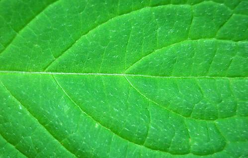 Leaf Texture 03