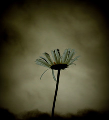 468 Last Flower