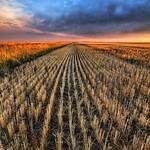 Cutting the Wheat