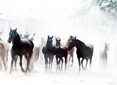 Yeguas (pericoterrades) Tags: de caballos vivid roco almonte galope passionphotography worldtrekker internationalflickrawards flickraward elrochuelvapotrossaca caballospericoterradesalmontecaballosel rocohuelvapotrossaca caballospericoterradesel