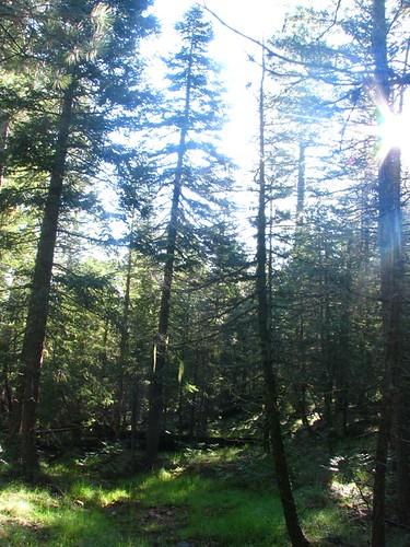 Camping070409 033sm