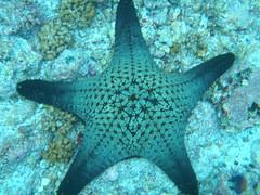 Underwater starfish