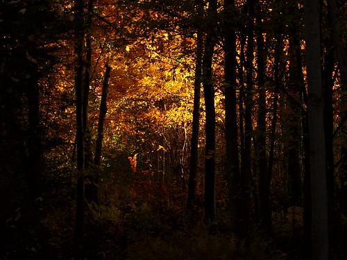 fall 104b