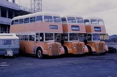 Graham G4 G2 G3 Hawkhead Depot (Guy Arab UF) Tags: park bus guy buses g4 royal arab depot g2 1956 g3 northern paisley graham iv hawkhead 1953 counties independents eastkent xs9834 gfn922 gfn936