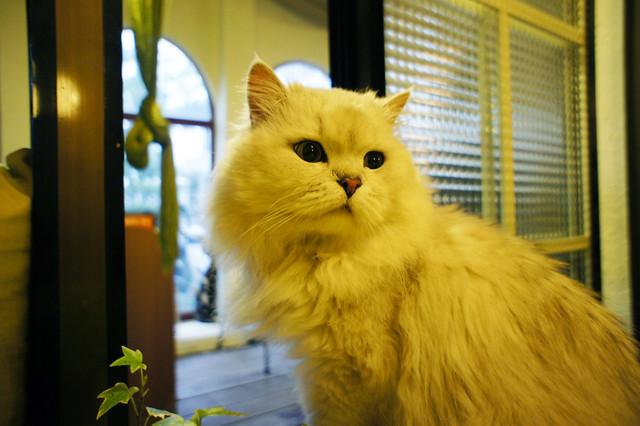 不受其他貓歡迎的貓大叔