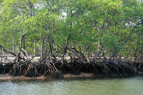 nature wetland Manguezal Itacaré Bahia