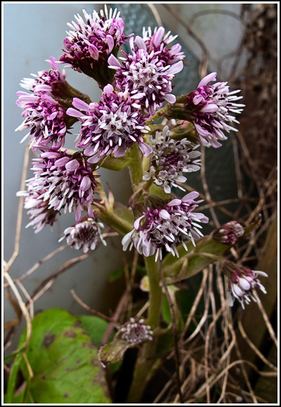 bog plant copy