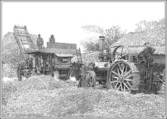 STEAM THRESHING (Norfolkboy1) Tags: england pen ink norfolk 1912 stipple rapidograph pointillism originaldrawing northtuddenham marshalltractionengine steamthreshing marshallthresher panthonybromage