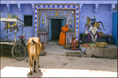 Bundi - Daily life (Elishams) Tags: street people woman india happy cow indian cycle streetseller rajasthan bundi northindia