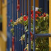 Flores en el Invierno - Chile Study Abroad